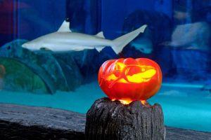 Halloween der Meere